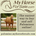 My Horse for Sale